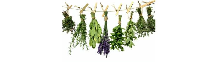 Plante uscate medicinale